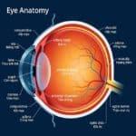 Giải Phẫu Hốc Mắt *