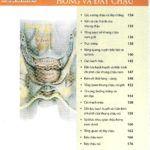 Atlas Giải Phẫu Chậu Hông