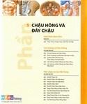 atlaschauhong-1_xray-vn