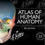 Atlas Giải Phẫu Chi Dưới – Netter v6 2016