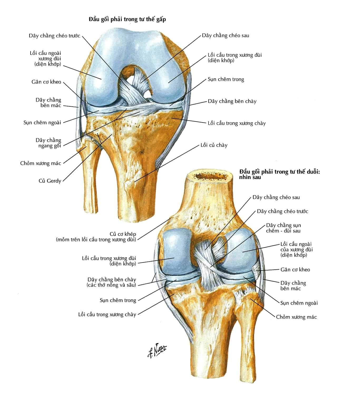 Hình ảnh MRI chấn thương khớp gối